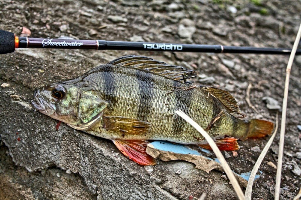 рыбалка на форель ялта